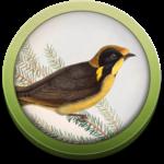 Field Guide to Victorian Fauna APK icon
