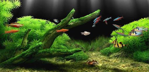 Aquarium Live Wallpaper Download For Pc On Windows 7 8 10 Mac