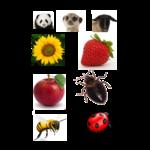 Scientific names icon