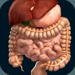 Internal Organs in 3D (Anatomy) icon