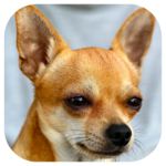 Dog Barking Sounds icon