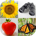 Easy Pictures - Photo-Quiz with 5 Different Topics FOR PC