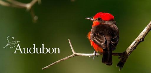 Audubon Bird Guide pc screenshot