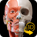 Muscle | Skeleton - 3D Atlas of Anatomy icon