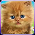 Talking baby cat. icon