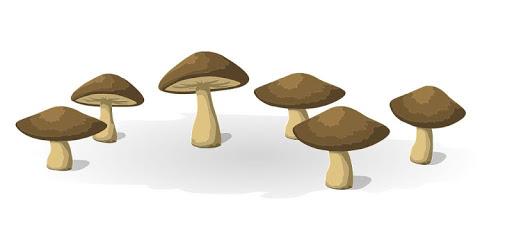 Mushrooms pc screenshot