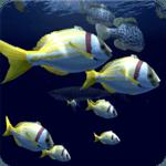 Fish Schooling VR icon