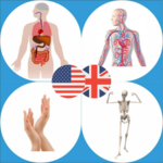 Body Parts Name and Pictures icon