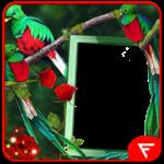 Quetzal Insta DP icon