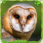 Furious Owl Simulator icon