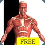 Visual Anatomy Free for pc icon