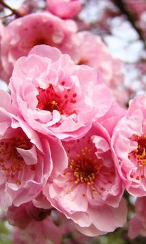 Spring Love live wallpaper APK screenshot 1