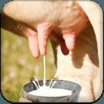 Milk Cow Game icon