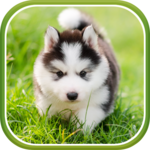 Cute Puppies Live Wallpaper FOR PC