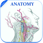 Gray's Anatomy - Atlas    Offline    Free icon