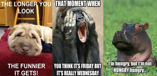 Funny Animal Meme pc screenshot