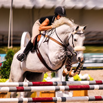 Horse Racing & Jumping Master 3D Stunts icon