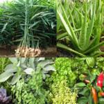 Medicinal plants icon