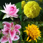 Flower Memory Game FOR PC
