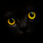 Blackcatcard: safe, secure wallet & prepaid card icon