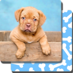 Puppy Games Kids - Cool Puppies for Cool Kids FOR PC