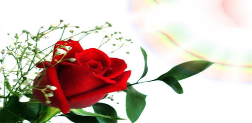 Beautiful flowers and roses pictures Gif pc screenshot