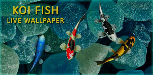 3D Koi Fish Wallpaper HD Fish Live Wallpapers Free For PC