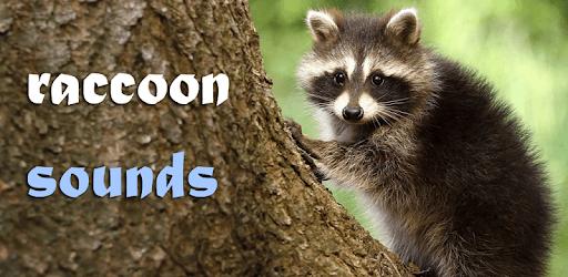 Sounds of Raccoon pc screenshot