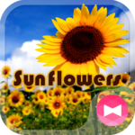 Summer Wallpaper Sunflowers APK icon