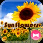 Summer Wallpaper Sunflowers icon