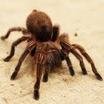 Especies de arañas icon