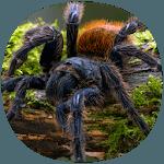 How to Take Care of a Pet Tarantula or Scorpion icon