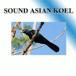 Cuckoo sounds to birds. icon