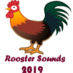 Rooster Sounds 2019 icon