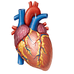Cardiology Mnemonics, History Taking & Examination icon