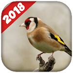 Goldfinch singing icon