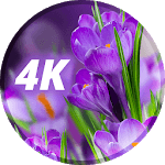 Wallpaper with flowers icon