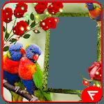 Rainbow Lorikeet Insta DP icon