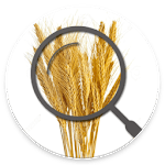 Gluten Free Scanner, gluten free or not icon