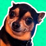 Best Dog Stickers for WhatsApp WAStickerApps icon