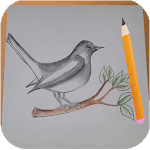 How to Draw Birds icon