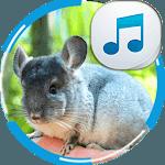Chinchilla Sounds icon