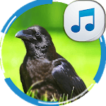 Sounds of Crows icon