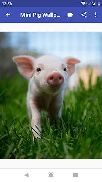 Mini Pig Wallpapers APK screenshot 1