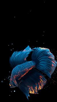Betta Fish Live Wallpaper FREE APK screenshot 1