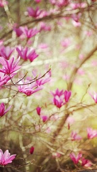Spring Wallpapers Apk Download For Free